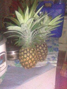 Pineapple - pineapple