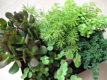 plants - collection of plants
