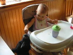 The baby feeding the dog - The dog barely eats her dog food, because the baby keeps her full with scraps from her high chair!