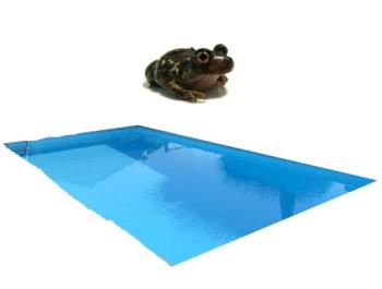 Hopping Pools - Phoenix we have a species called the Spade Foot Toad.