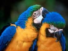 beautiful parrots - parrots
