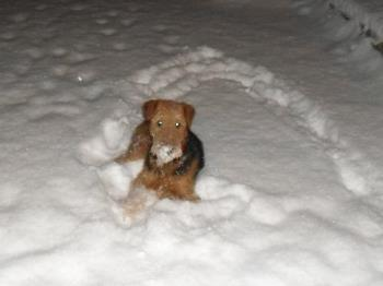 I love the snow - I love to lay down in the snow, even if Mom don't let me do so