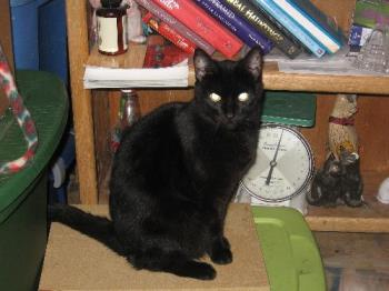 Nef - Our pretty 8 year old black cat