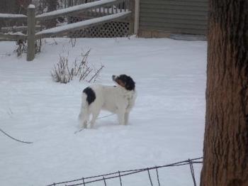 Ciara - Ciara loves the snow.