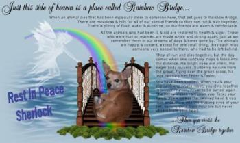 Rest in Peace Sherlock - You are loved Sherlock and missed but you know how much Mum loved you and what a wonderful Life and love she gave you I know you will be with her and guide her the right way