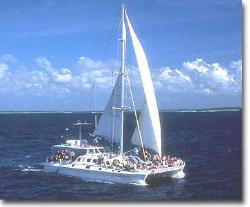 catamaran - just a cat sailing along woohoo