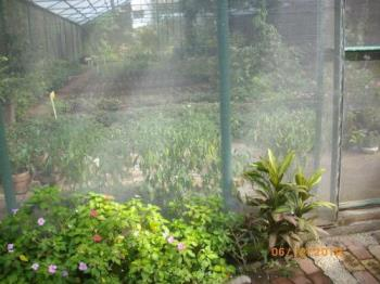 Vegetable Garden - A vegetable garden at home
