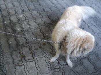 Dog poop - Dog poop is smelly.