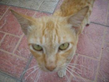 Cat - Will you bite or scratch?