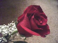 red rose - a pretty red rose given to me on Valentine's day, it reminds me that I'm loved :)