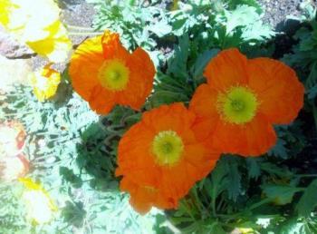 flower garden - Garden in bloom