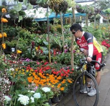 Flower garden - Garden along the road to Tagaytay