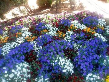 Garden - Flower garden