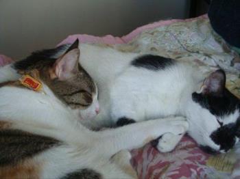 Sleeping together - How sweet!
