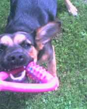 Dog - My dog
