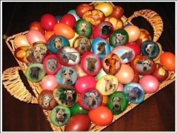 Aire-oua incondeiate - Easter eggs with the portraits of my friends' dogs.