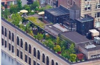 rooftop garden - this is a roof top garden, one can sit and enjoy
