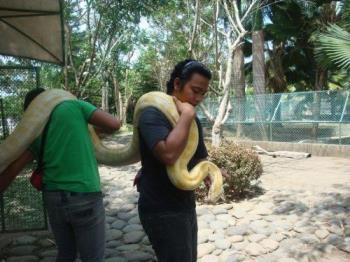 Python - Do want this kind of pet?