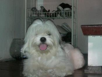 Odie - My lovey dog.
