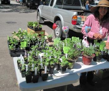 Serena Wyatt Sells Seedlings at Farmers Market in  - I love being able to buy the herbs and vegetables from this lady who sells them at Farmers Market.