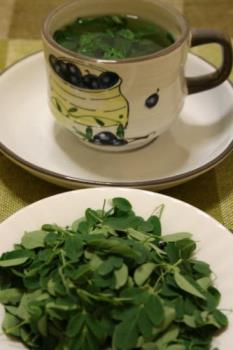 Fresh malunggay tea - Malunggay is very nutritious