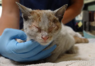 Chinese Kitty Rides on LA-bound Freighter - A 3-month-old kitten survived a journey across the Pacific, traveling from Shanghai to Los Angeles without food or water while locked in a freight container on a ship.