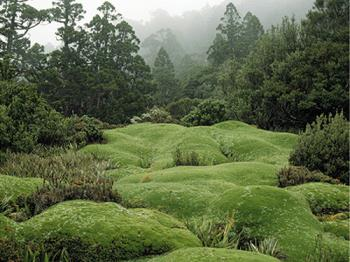 Mt, Anne - The fabulaous cushion plants of Mount Anne in Tasmania