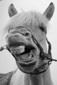Horse grimace - My horse agrees, he's also not a very patient horse :-)