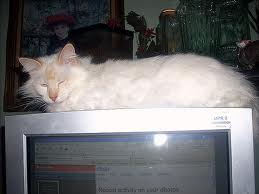 Cat over monitor - I have 5 cats and three monitors, to much space for my sleeping kitties