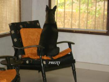 Preiti our pet