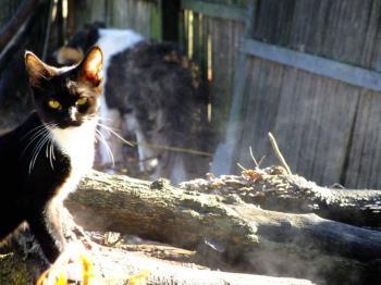 Kitten on the wood pile
