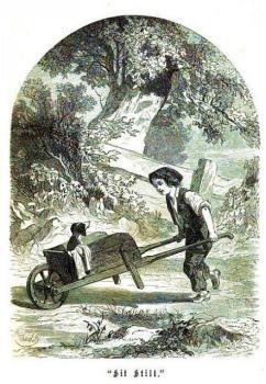 Dog in a barrow