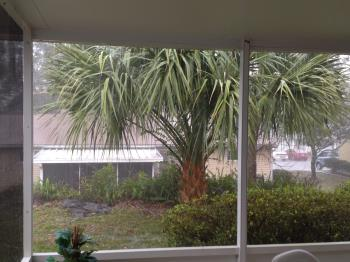 Rainy view of our back yard