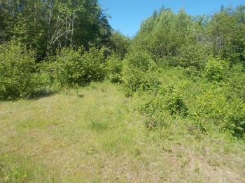 Heavily overgrown logging road splitting off. Passable on foot only. There a whole network of them hidden back in here.