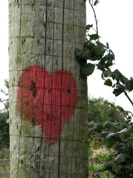 Don't let your love become wooden, forgive others from real love, with real love from your heart