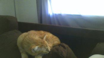 My furbaby Garfield
