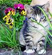 cat - cat with flowers