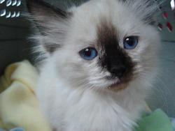 The New Kitten - The new kitten