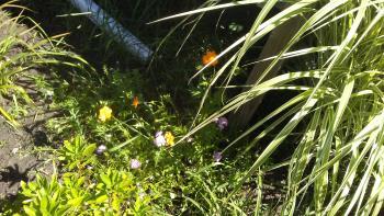 The beginning of new wildflowers, Marsha.