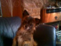 My Pet - He is very precious and my best Friend he is my daily companion and I would not be without him
