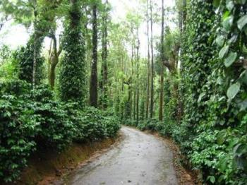 Coffee estate, Coorg