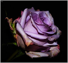 flor - mylot =D