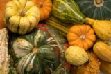 Various Types of Squash - Different varieties of squash