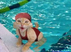 Kitty Swimmer - Kitty in pool