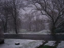 Beautiful picture of snow..here in wv - I took this standing infront of my house looking towards the street..Just so beautiful to see the snow..Thank God for the Seasons..Each one has it's splash of beauty!!!