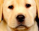 Dog - Dog!