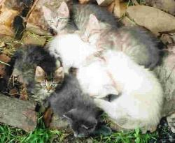 My Little Babies in year 2004 - These were my Baby Kittens in year 2004 .. I no longer have any of them. Some Died others we gave to homes.