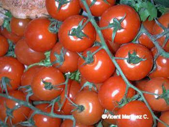 tomato - tomatoes......