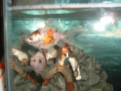 My Fish - These are my fish Madonna and Jack Tripper.