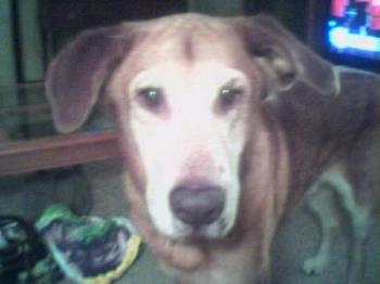 My Sweet Puppy Hershey - Hershey, my beloved dog